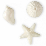 White Sea Shell Shaped Soap - 3 styles