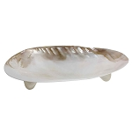 Real 8-inch Clam Shell Dish