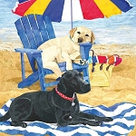 Dog Days At the Beach Beverage Napkins (20)