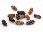 Snow-Kissed Loose Pine Cones (12)