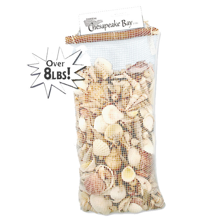 8.5 lb Bag of Seashells for Fill & Scatter