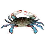 Maryland Chesapeake Bay Plastic Blue Crab - 2 sizes