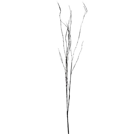 "50"" Realistic Barren Black Twig Branch Floral Spray"