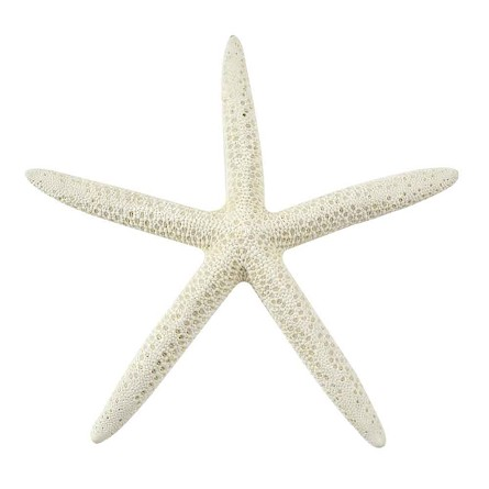 Bleached Finger Starfish - 3 sizes